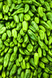 Pimenta verde Foto de Stock Royalty Free