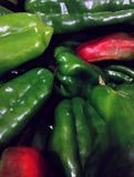 Pimenta verde fotografia de stock