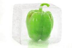Pimenta verde no cubo de gelo Fotos de Stock Royalty Free