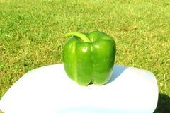 Pimenta verde no jardim Foto de Stock
