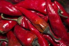 Pimenta vermelha amarga na grande quantidade Foto de Stock