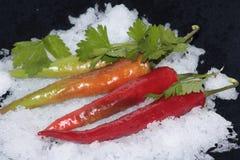 Pimenta vermelha amarga para aqueles que como picante Fotografia de Stock Royalty Free