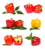 Pimenta vermelha com folhas Fotos de Stock