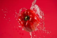 Pimenta vermelha no fundo vermelho Fotos de Stock Royalty Free