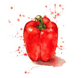 Pimenta vermelha pintado à mão Fotos de Stock