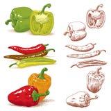 Pimentas ilustração stock