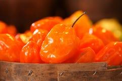 Pimentas alaranjadas do Habanero Foto de Stock Royalty Free