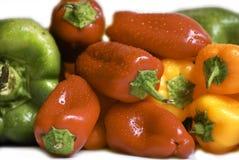 Pimentas coloridas Imagens de Stock