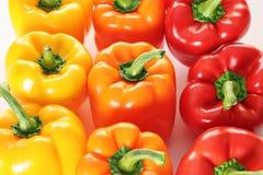 Pimentas coloridas alinhadas toda Imagens de Stock