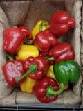 Pimentas coloridas na caixa Imagem de Stock Royalty Free