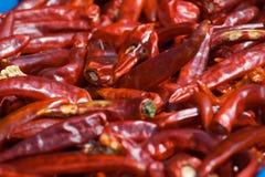 Pimentas coreanas Fotografia de Stock Royalty Free