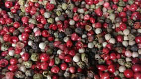 Pimentas da mistura: Pimentos vermelhos, pretos, brancos e verdes video estoque