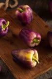 Pimentas de Bell roxas orgânicas Foto de Stock