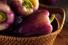 Pimentas de Bell roxas orgânicas Imagem de Stock Royalty Free