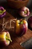 Pimentas de Bell roxas orgânicas Imagens de Stock Royalty Free