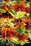 Pimentas de pimentão Fotos de Stock Royalty Free