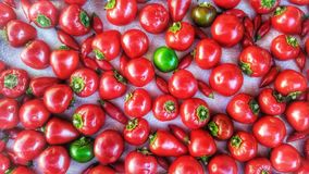 Pimentas de pimentão encarnados imagens de stock royalty free