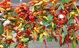 Pimentas de pimentão quente Foto de Stock