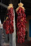 Pimentas de pimentão secadas Fotografia de Stock Royalty Free