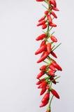 Pimentas de pimentão secadas em uma corda Fotografia de Stock