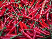 Pimentas de pimentão vermelho Fotografia de Stock Royalty Free