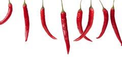 Pimentas de pimentão vermelho de suspensão em uma fileira Fotografia de Stock Royalty Free
