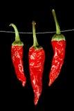 Pimentas de pimentão vermelho secadas Fotos de Stock