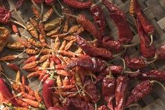 Pimentas de pimentão vermelho secadas Foto de Stock