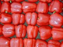Pimentas de sino vermelhas Fotografia de Stock
