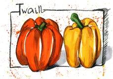 Pimentas desenhados à mão do esboço no fundo branco Fotos de Stock
