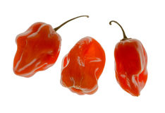 Pimentas do Habanero Imagem de Stock Royalty Free