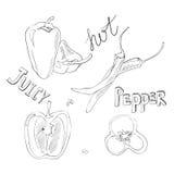 Pimentas doces e quentes Grupo de vegetais tirados mão Ilustração do vetor com produtos do esboço Foto de Stock