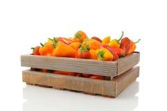 Pimentas doces na caixa de madeira Imagem de Stock