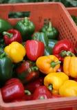 Pimentas doces vermelhas e verdes Fotografia de Stock