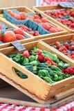 Pimentas e tomates Fotos de Stock Royalty Free