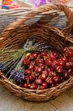 Pimentas frias encarnados e flores da alfazema Fotografia de Stock