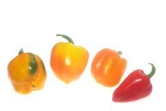 Pimentas maduras coloridas Imagens de Stock