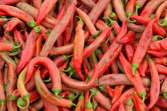 Pimentas orgânicas Fotos de Stock Royalty Free