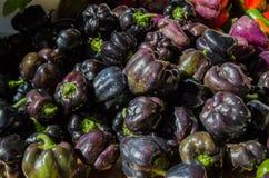 Pimentas pretas Fotografia de Stock Royalty Free