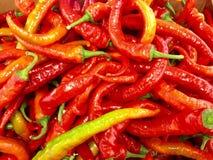 Pimentas quentes Fotografia de Stock