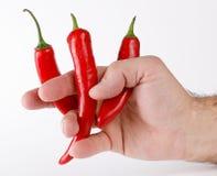 Pimentas quentes entre os dedos Imagem de Stock Royalty Free
