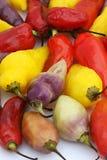 Pimentas quentes peruanas imagens de stock