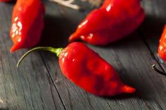 Pimentas quentes picantes de Bhut Jolokia Ghost Imagens de Stock Royalty Free