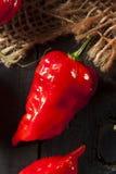 Pimentas quentes picantes de Bhut Jolokia Ghost Fotos de Stock Royalty Free