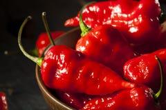 Pimentas quentes picantes de Bhut Jolokia Ghost Fotografia de Stock Royalty Free