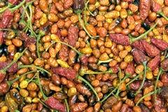 Pimentas quentes secadas foto de stock royalty free