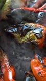 Pimentas Roasted e fumado no calor imagens de stock royalty free