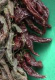 Pimentas secadas Imagens de Stock