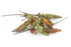 Pimentas secadas Foto de Stock Royalty Free