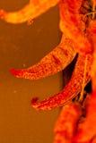 Pimentas secadas outono Fotografia de Stock Royalty Free